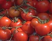 50-60 помидоров с куста